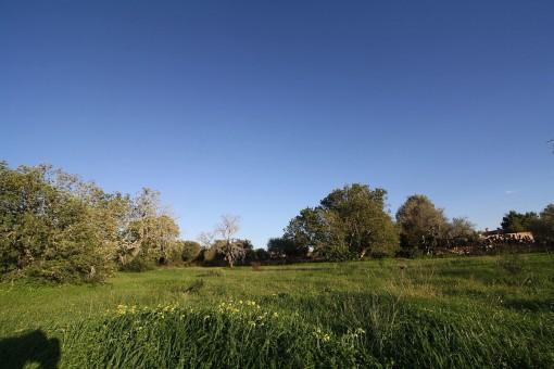 Maravilloso terreno para una finca grande en Llucmajor
