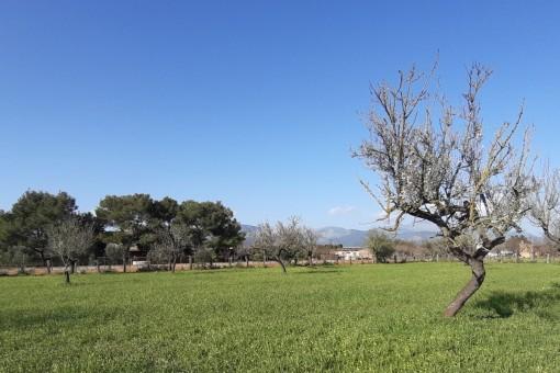 Vista del terreno