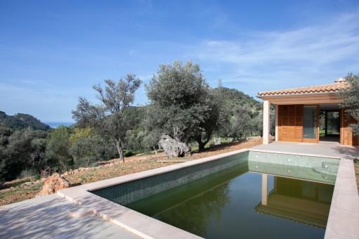 Piscina rodeada de olivos