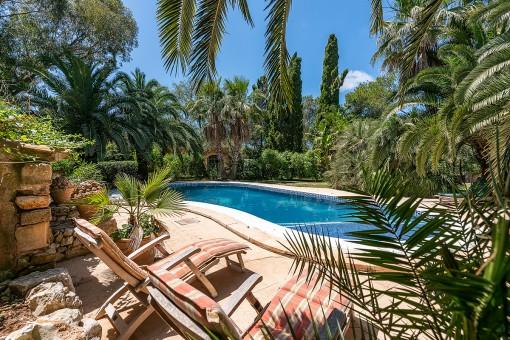 Piscina magnífica rodeada por palmeras