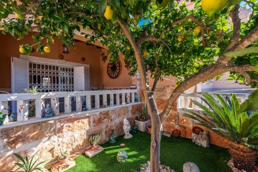 Terraza cubierta con limonero
