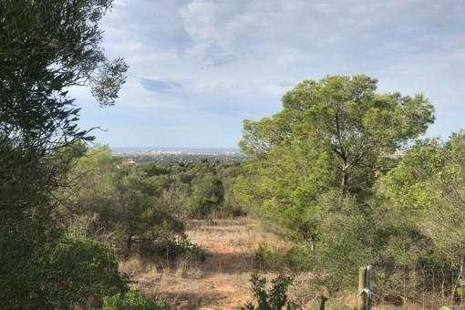 Solar en Sa Cabaneta - Marratxi